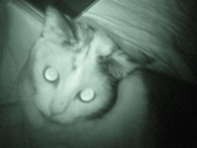 Infrared Zoe