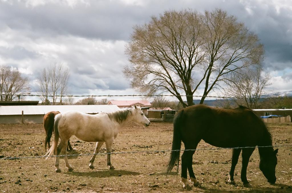 La Mesilla horses