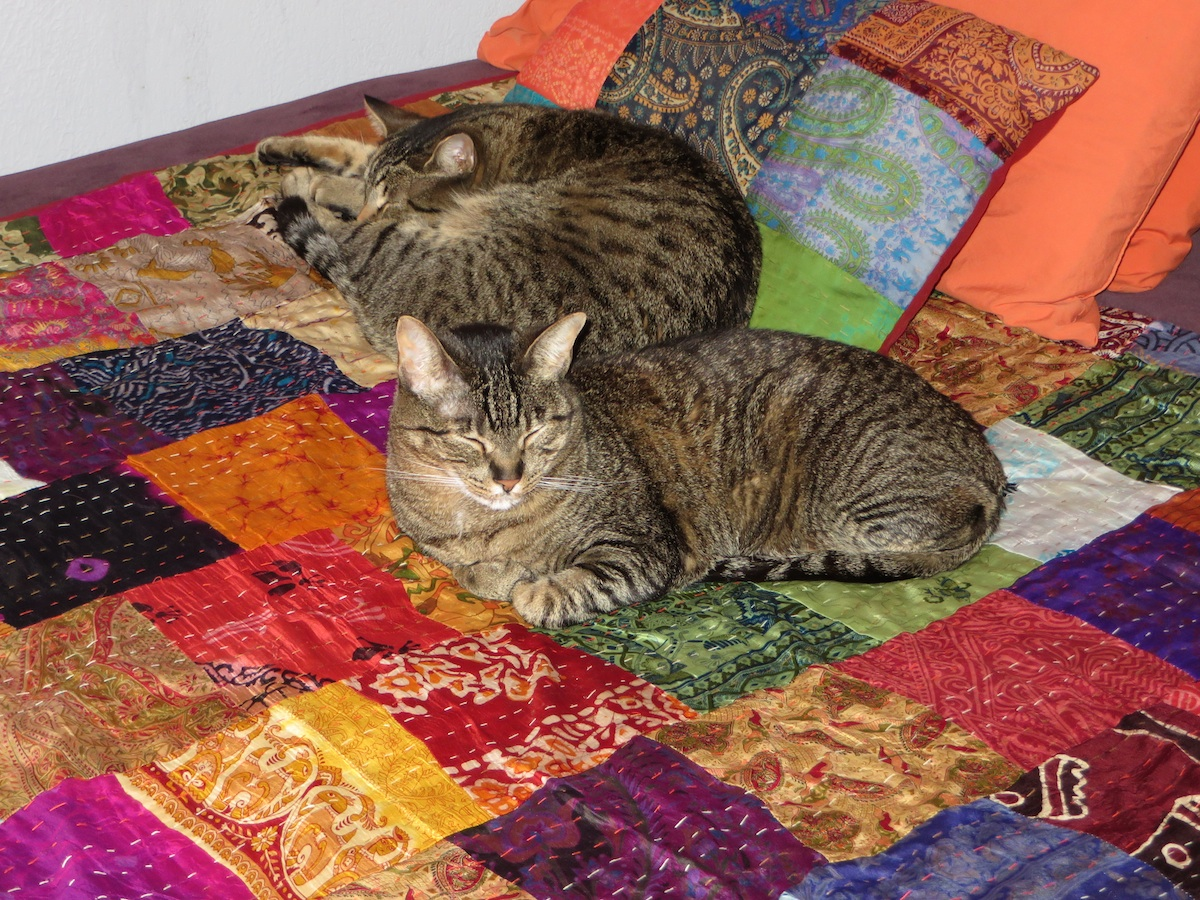 Still life with cats and quilt.