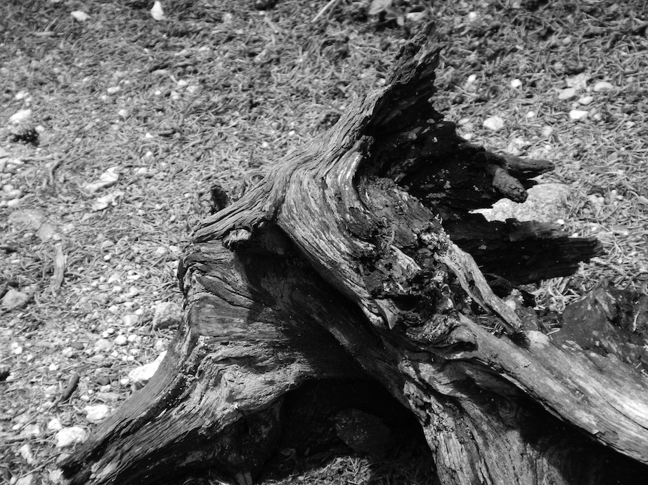 "Deadwood -- the Nikon AW100 has a nice ""High Contrast B&W"" filter."