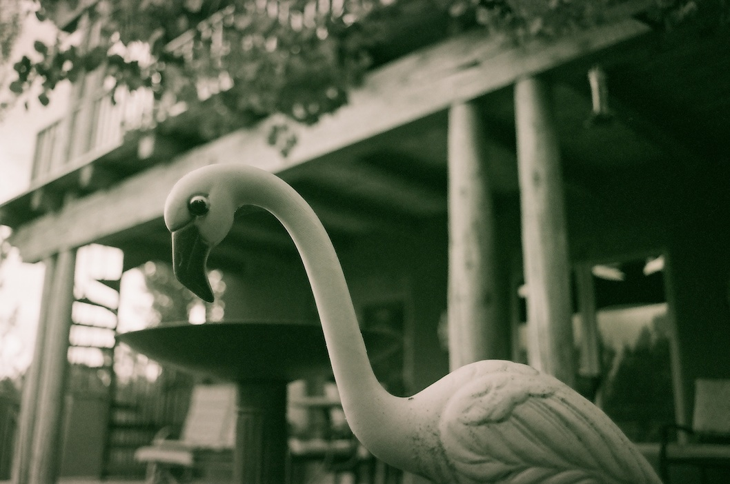 Magenta flamingo.  I used the 35mm at f/2.8.  Probably 1/1000 since it was hazy but bright.