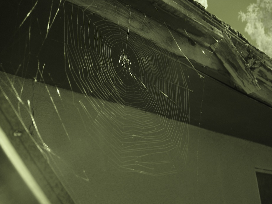 Spider web at the new casa.
