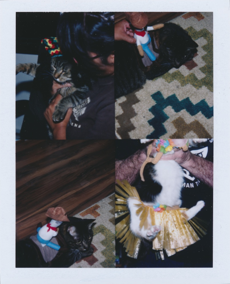 Cats in Halloween costumes.  There will be blood.