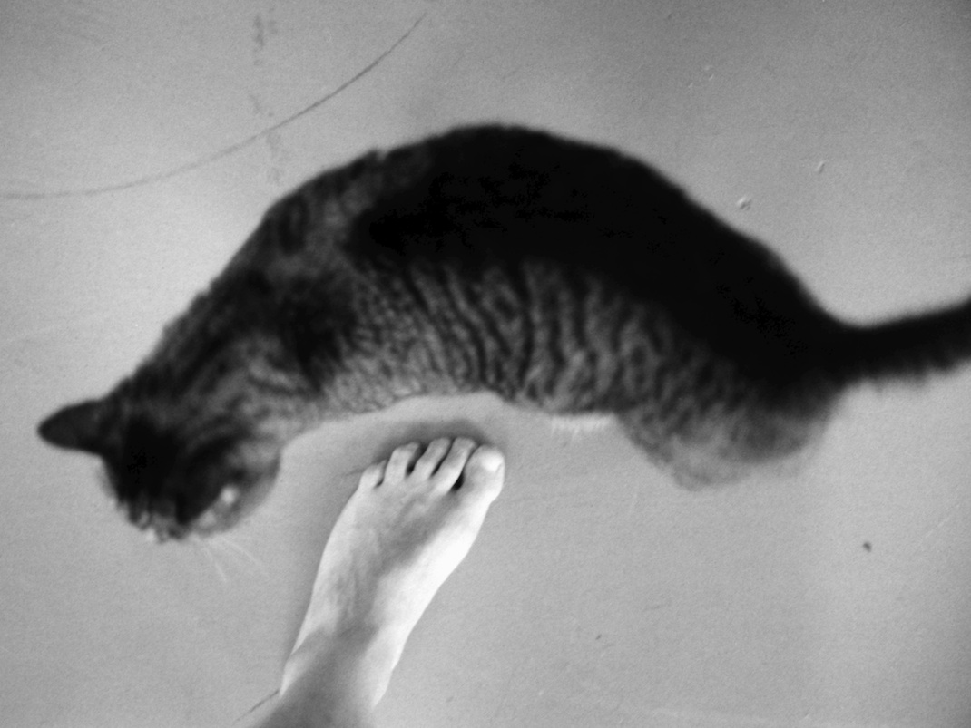 One of those lucky shots -- Goober's outline fits the contour of my foot perfectly.