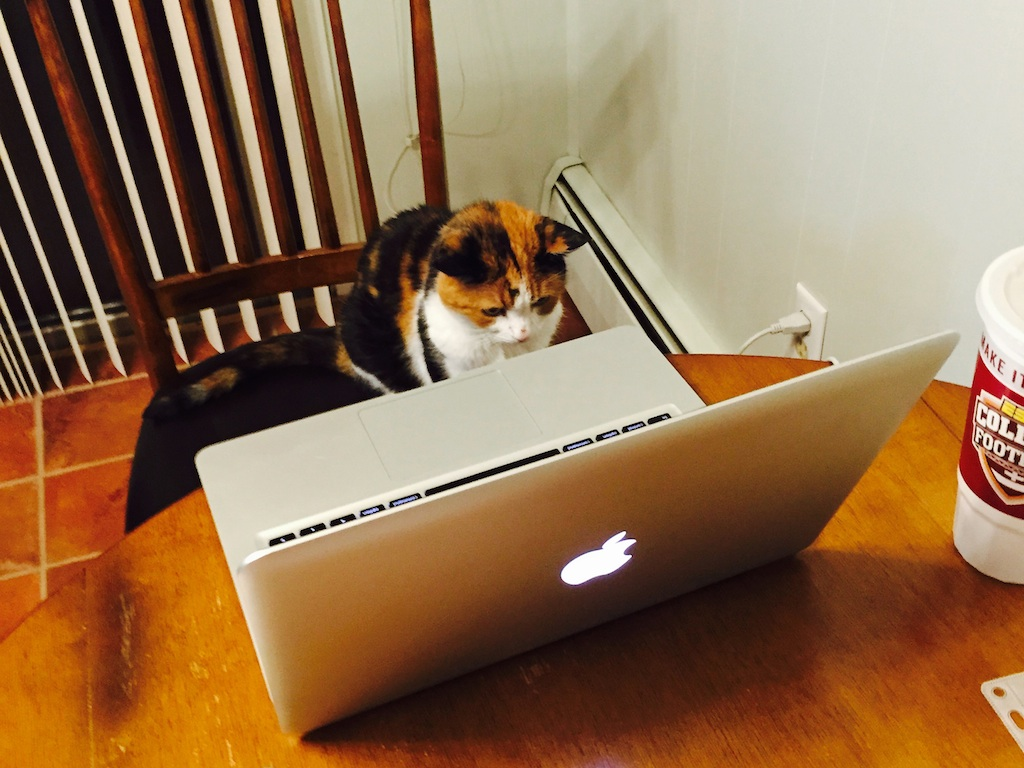 Zoe watching human videos.  Photo by M.