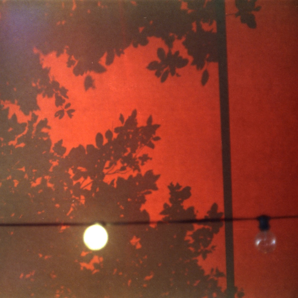 Tree shadows on canvas canopy. F/1.8 but I didn't record the shutter.  Cropped square.