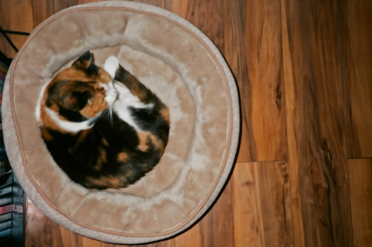 Zoe.  Circular cat in a circular bed.  Also flash at ISO 400.
