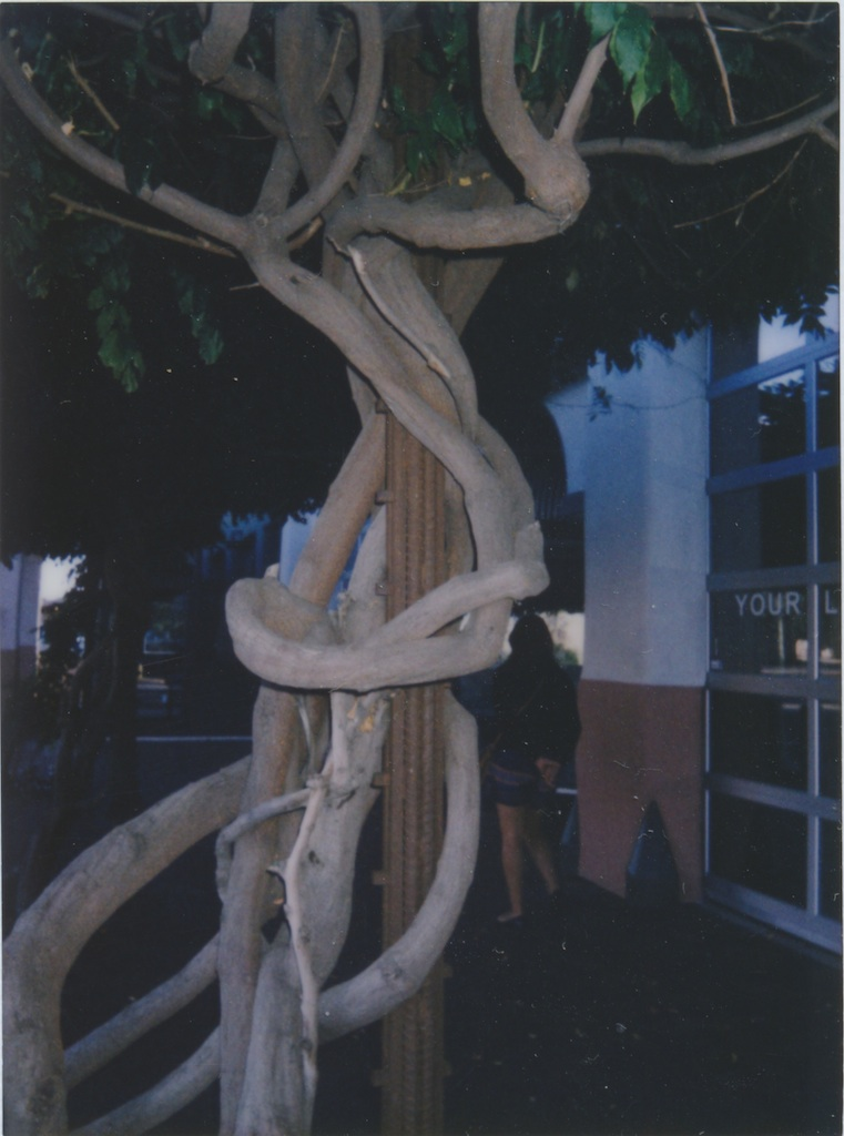 Cool tree on Sandoval St. in Santa Fe.