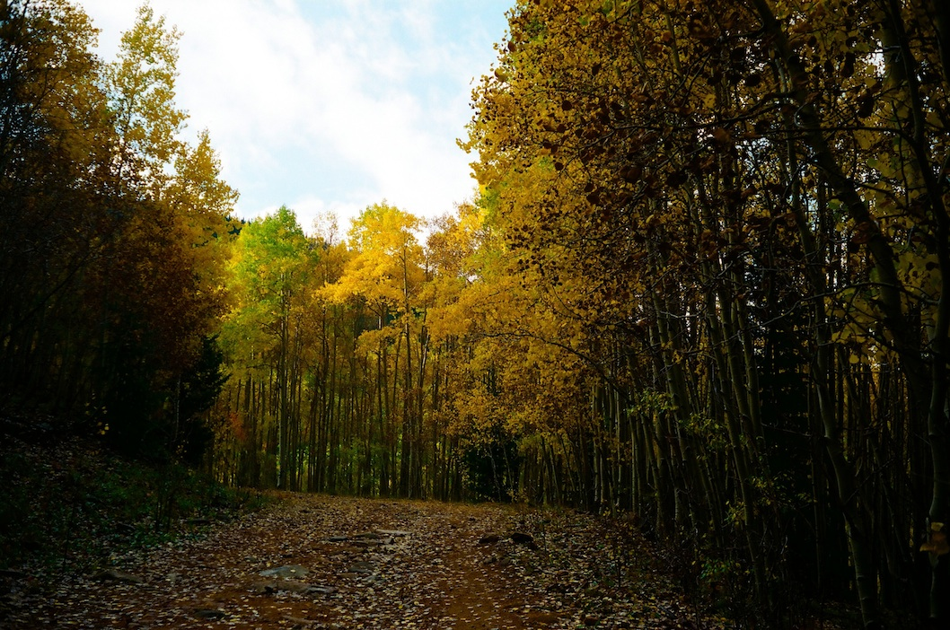 Aspen photo-op during the 2015 Big Tesuque Trail Run.  Tiny exposure and saturation tweaks.