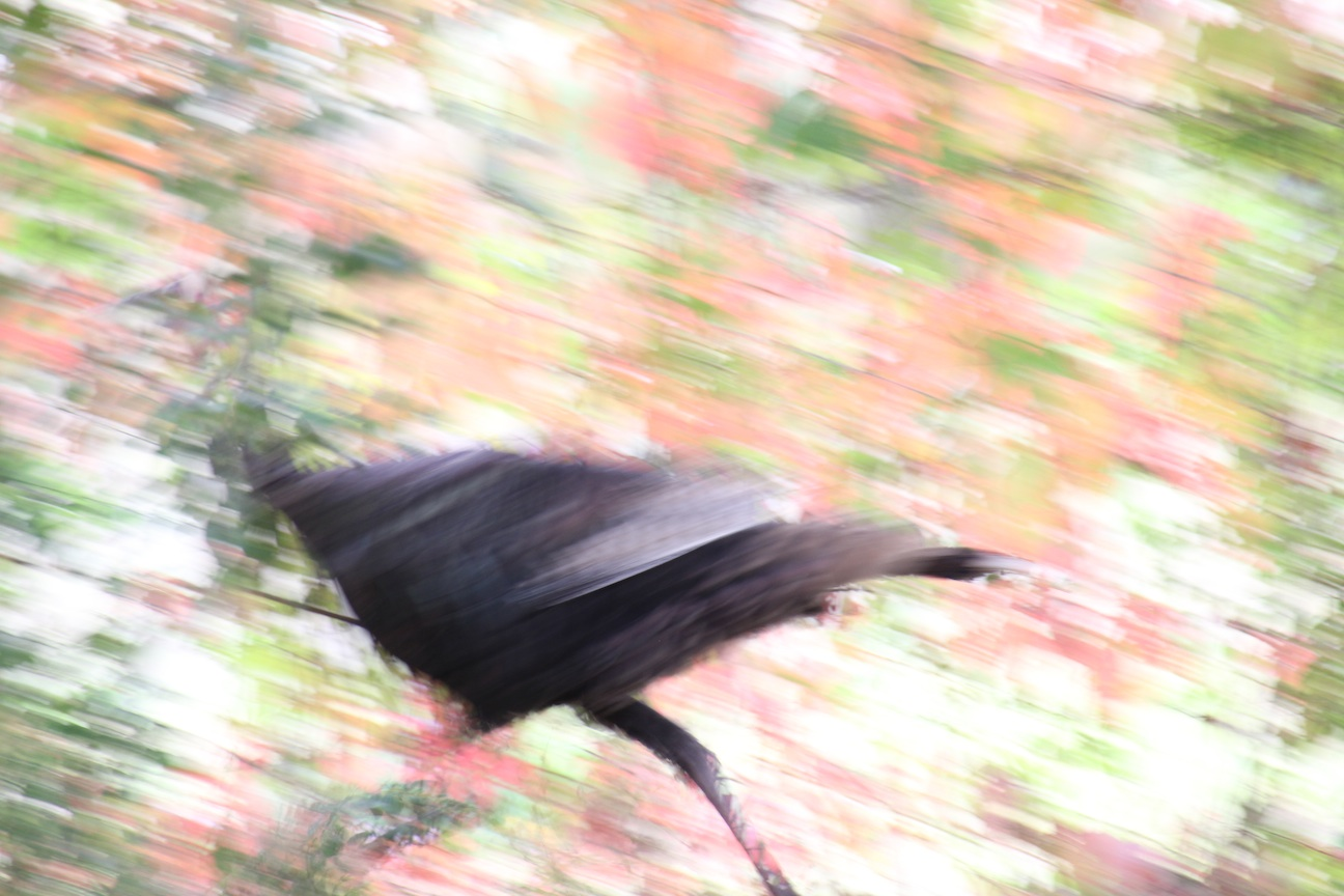 Tried to track while he moved.  Fail as a turkey picture but nice abstract colors.