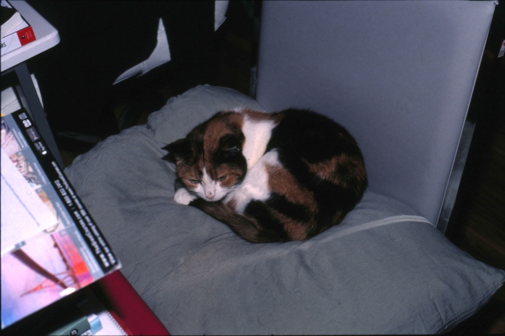 Sleepy Zoe.  The tables turned -- I had to clean up a scanned human hair in a photo of a cat.
