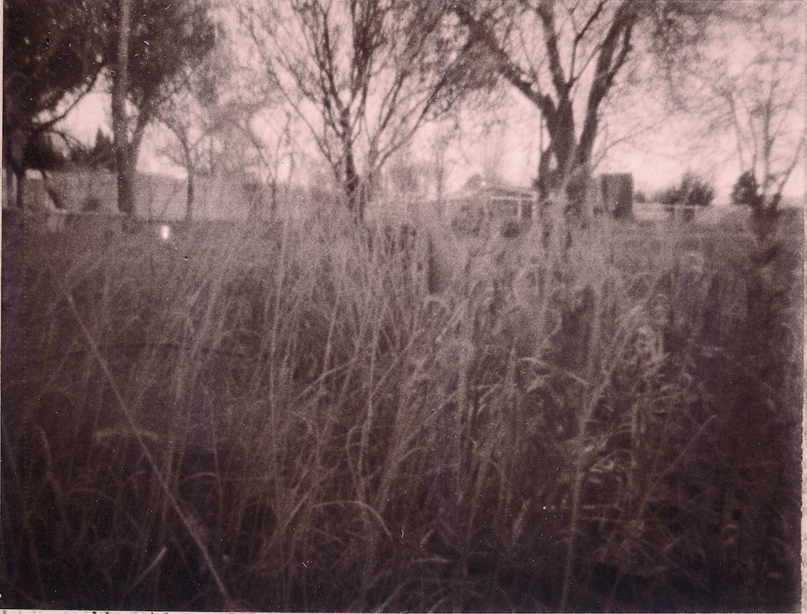 Curly grass negative.