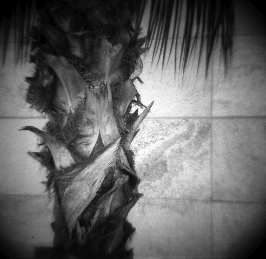 Palm tree and marble.