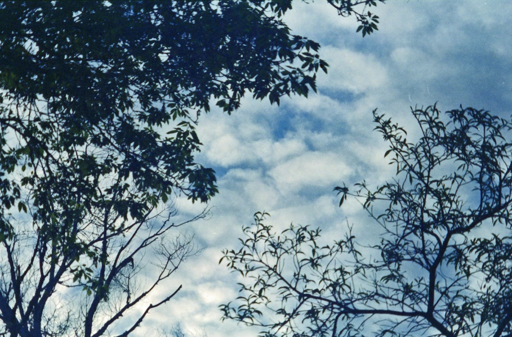 Trees & clouds.
