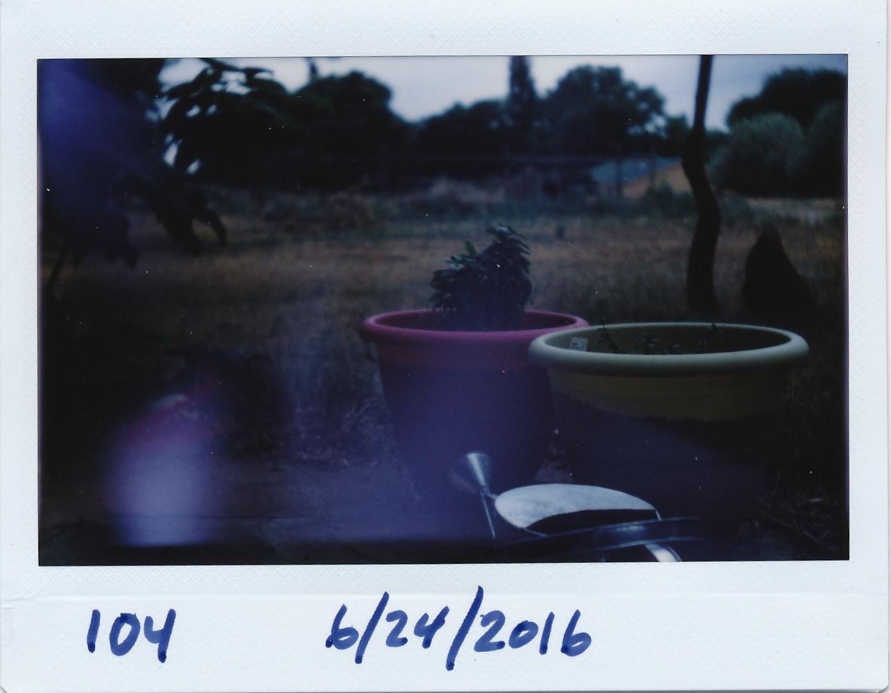 Herbs in pots.