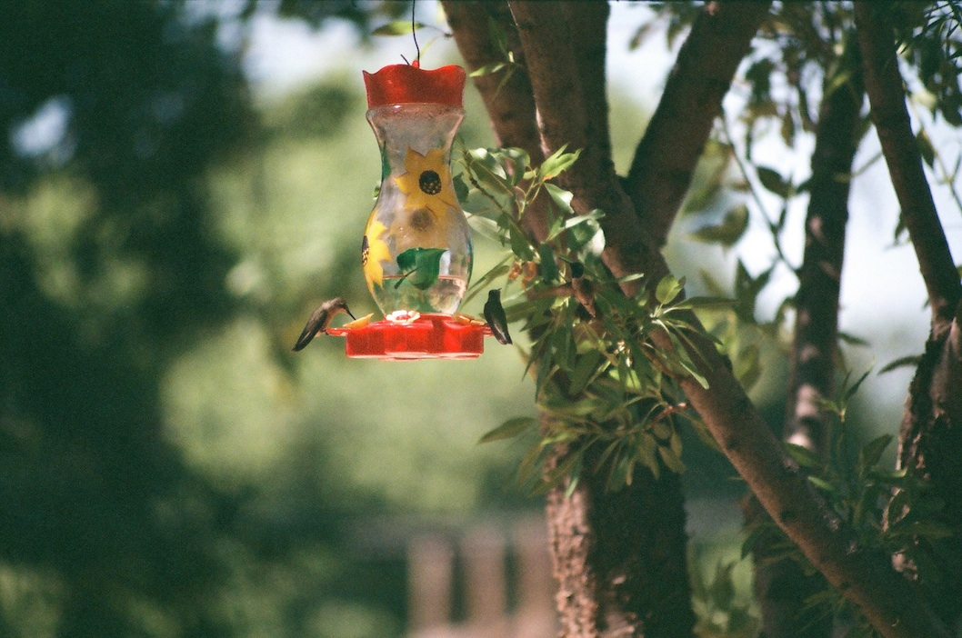 More hummingbirds with the Vivitar zoom.