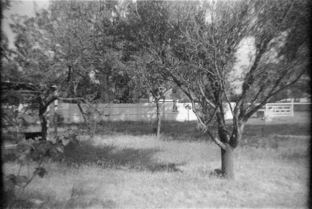 Fruit trees in the yard.