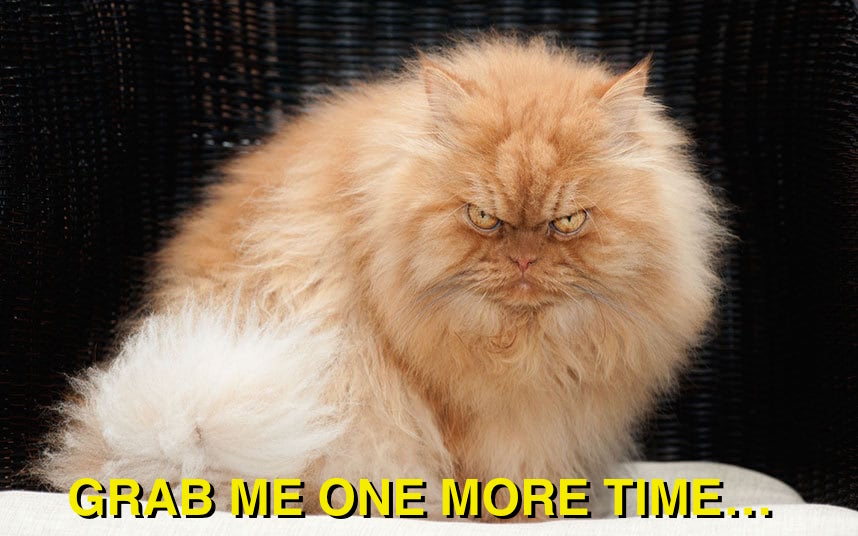 Garfi is the most pissed-off-looking cat ever.