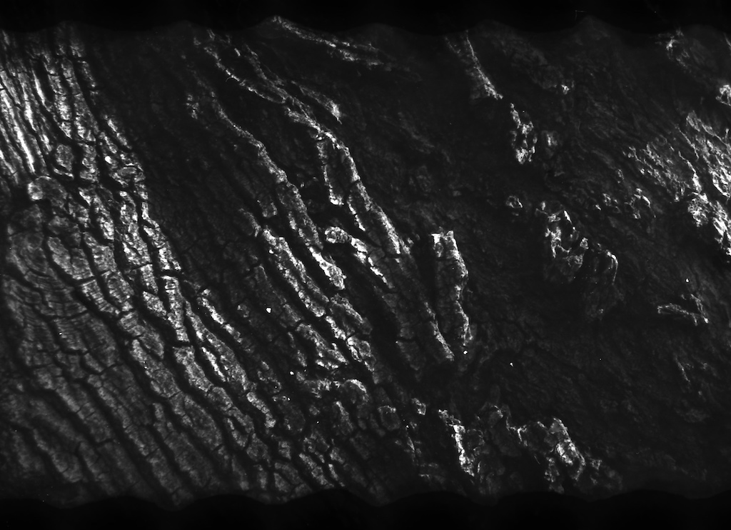 Tree bark.  Nikon FA set to ISO 25 and +1 exposure compensation (ISO 12).