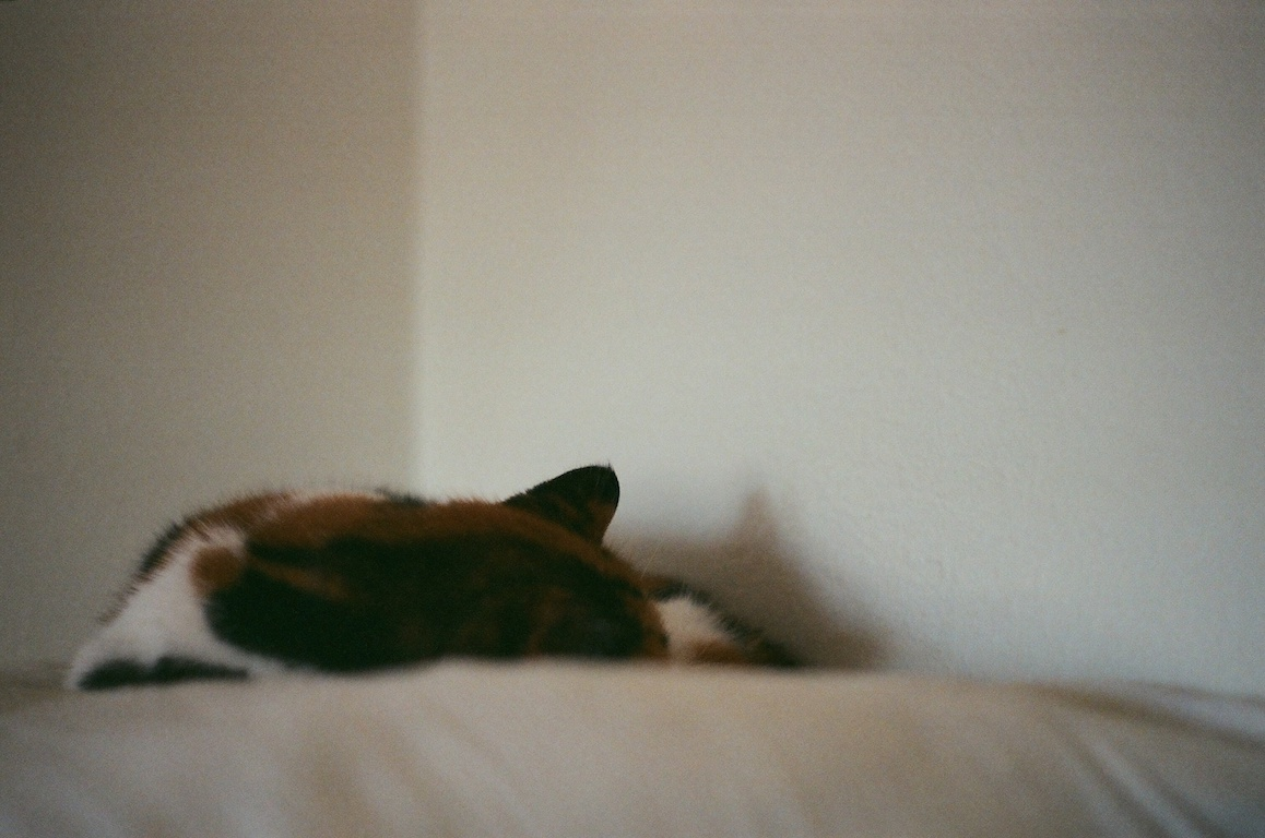 Sleepy Zoe.  Mostly shots of the cats on this roll.  Handheld at f/1.7 at ~ 1/30.