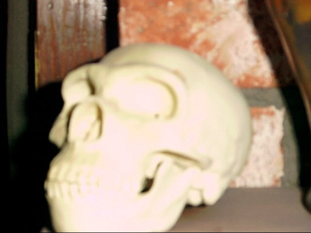 My Neanderthal skull replica.  Too close for the focus and the flash.