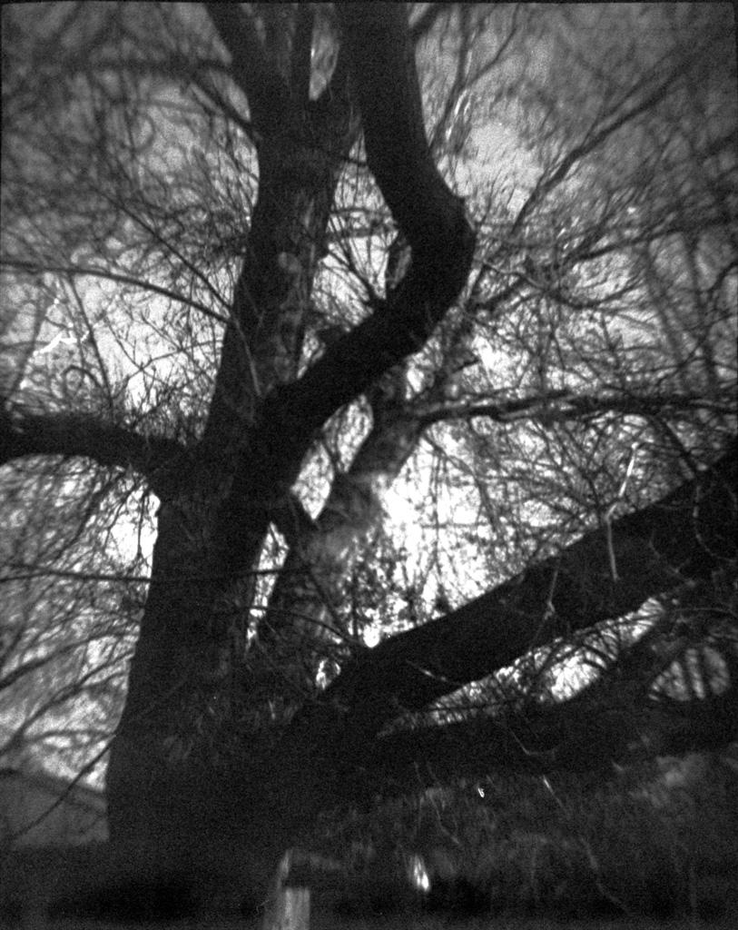 Dramatic tree.