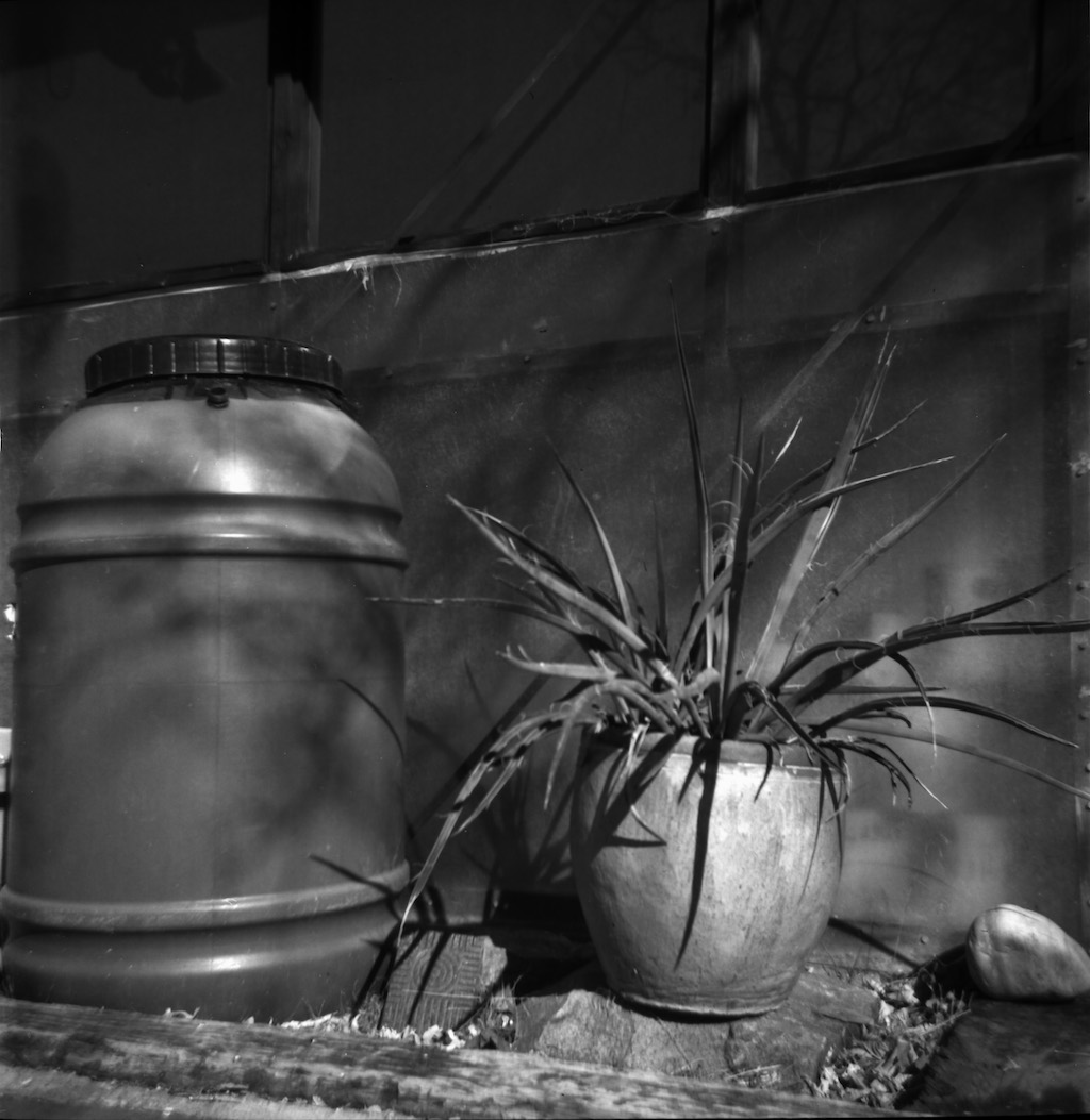 Rain barrel and agave.