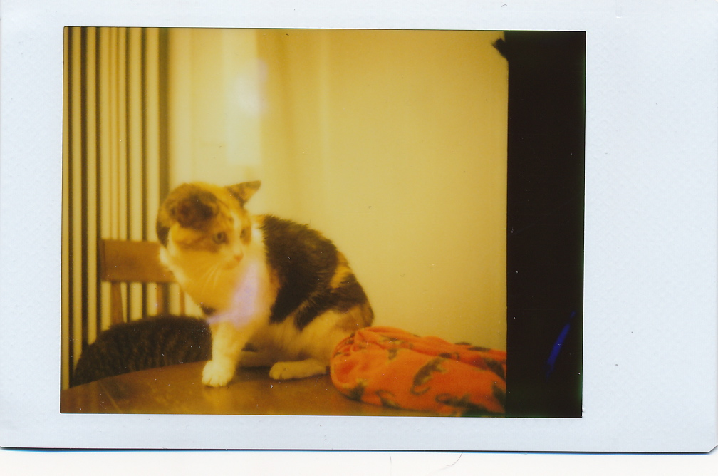 Zoe on Instax Mini in a 1952 Czech camera.