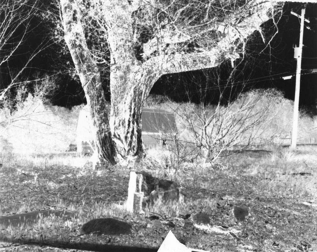 Tree negative