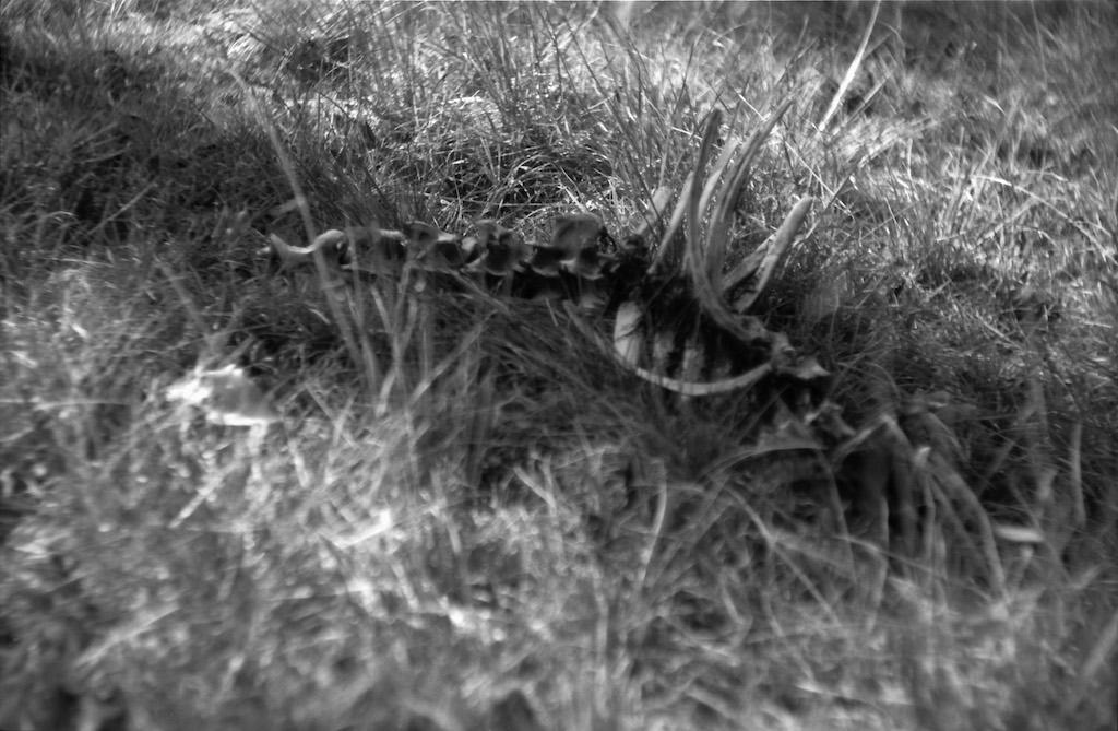 Deer carcass - Truchas Amphitheater