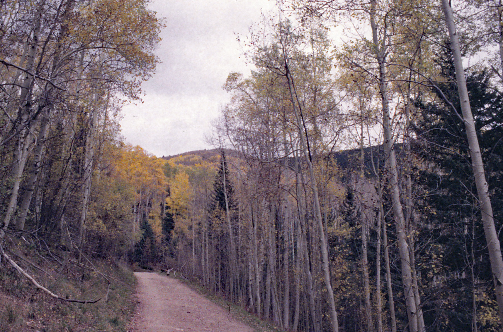 The road from Aspen Vista.