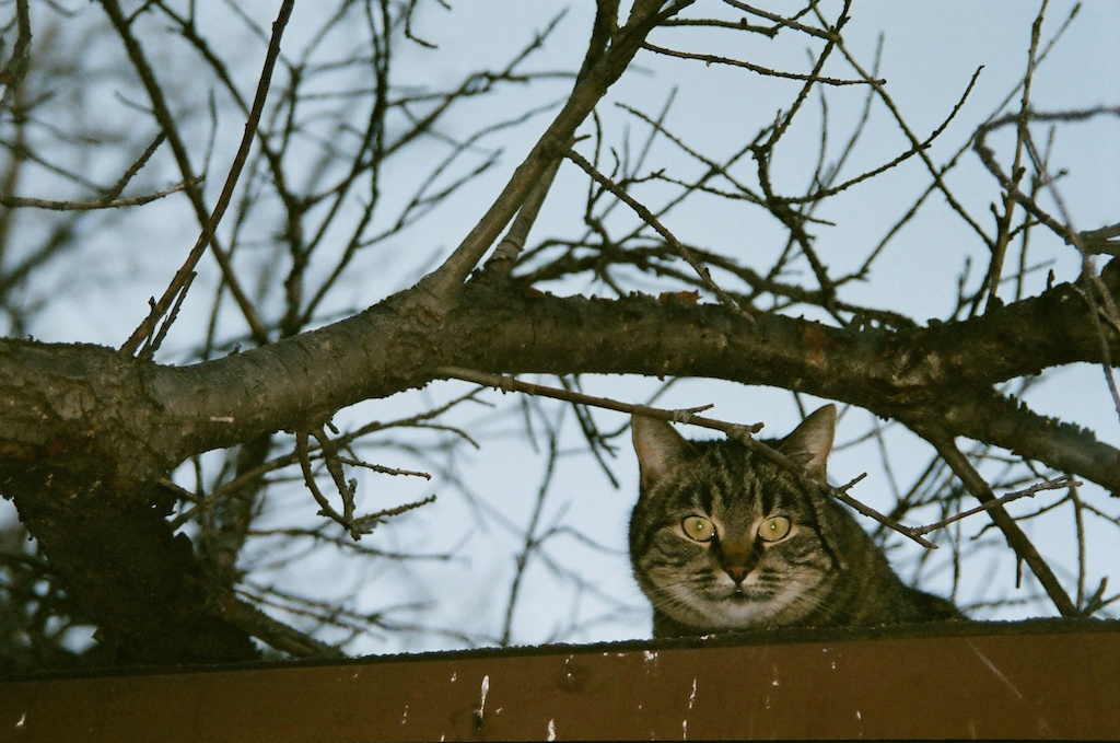 The neighbor's cat waiting for feral food on top of our shed.  We call him/her/not sure Cha-Ka.