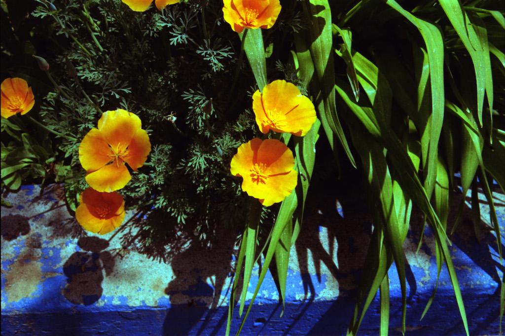 Flowers at the co-op in Santa Fe