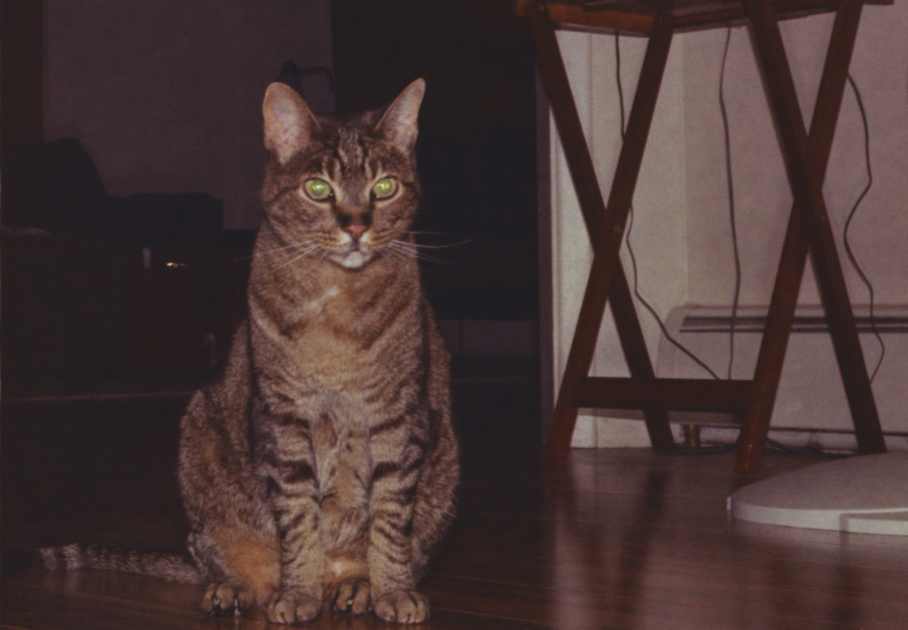 Goober looking rather handsome