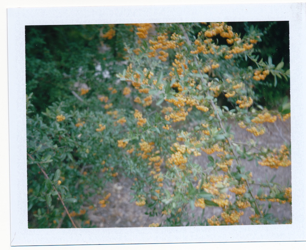 Part of it is in focus but the wind was whipping the bush.