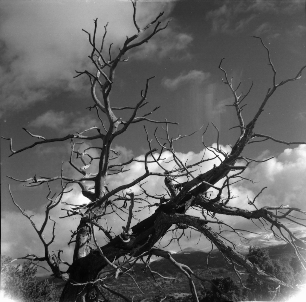 Gnarly tree. I think this is respooled film light leaks and not broken plastic.