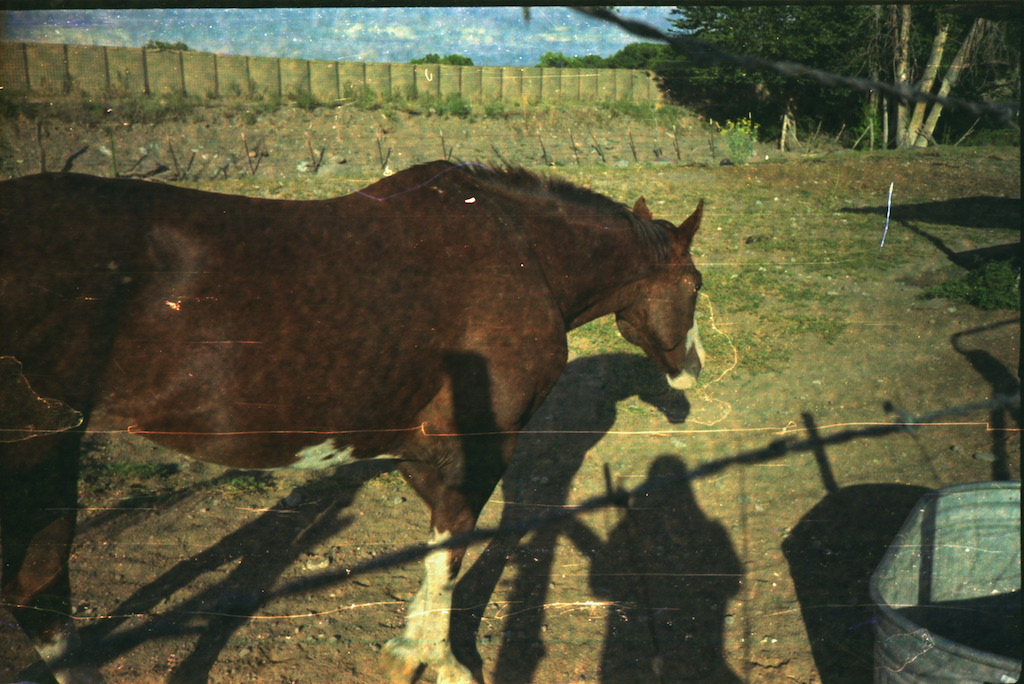 Our friend's horse. I seem to have gotten my shadow in a lot of these too.