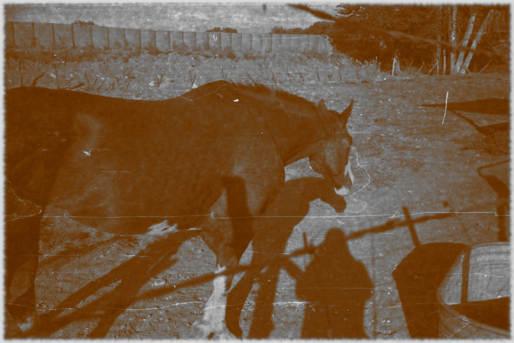 "Our friend's horse - ""old photo"" filter."