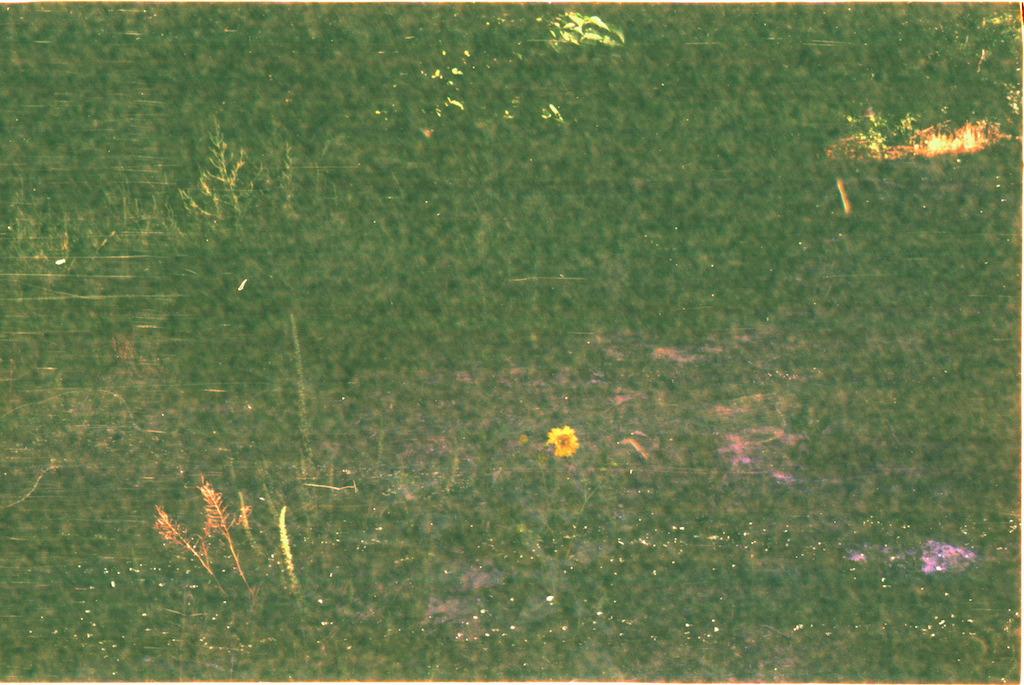 Grass & Flower.