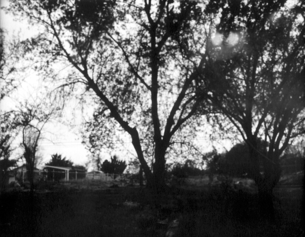 Tree in the back yard. Inexpensive Arista photo paper negative. Metered for ISO 6 at f/256.