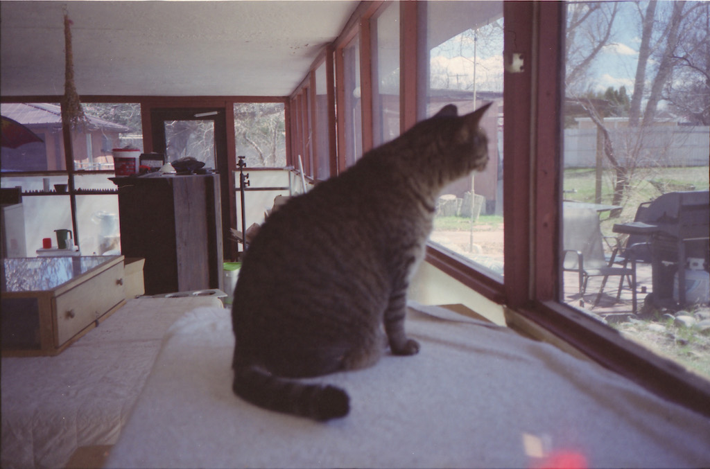 Jem checking out the stray cats outside.