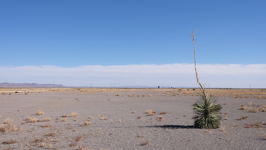 Lonely yucca.