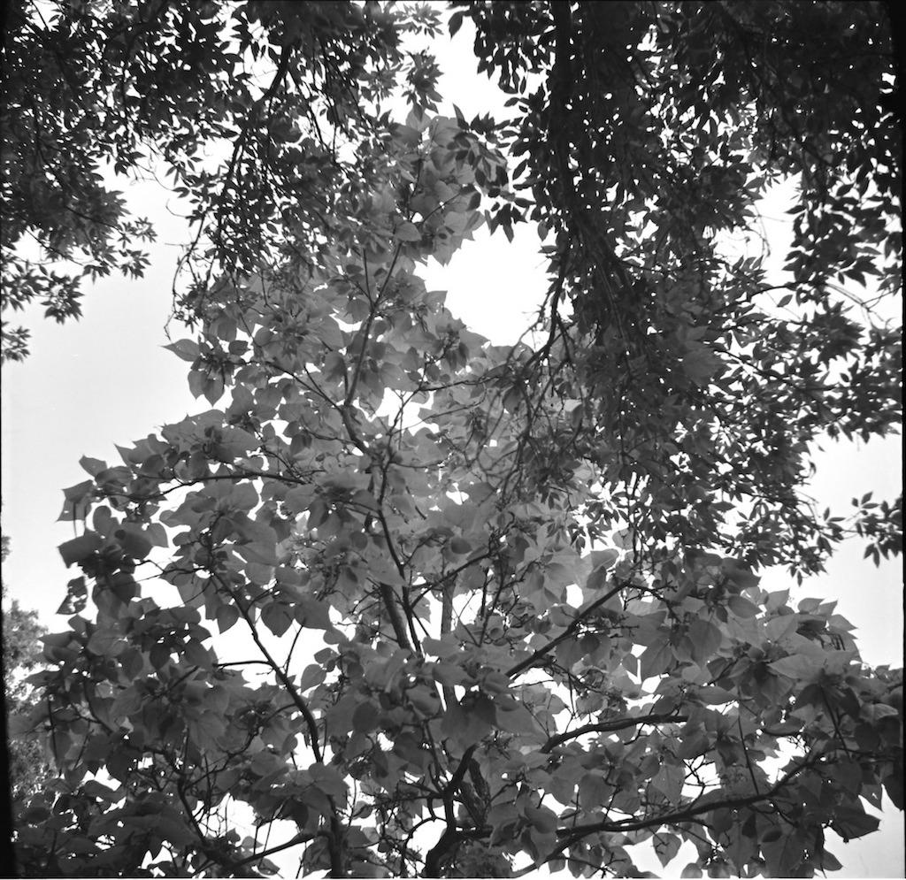 Beautiful backlit leaves.
