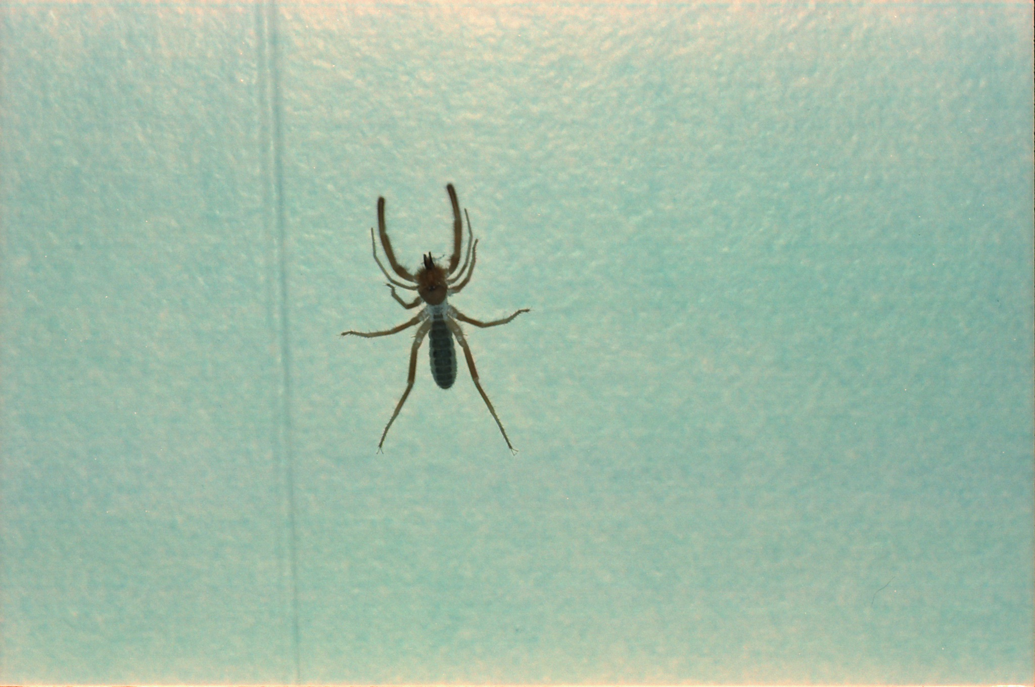 This was just chilling on the living room wall.