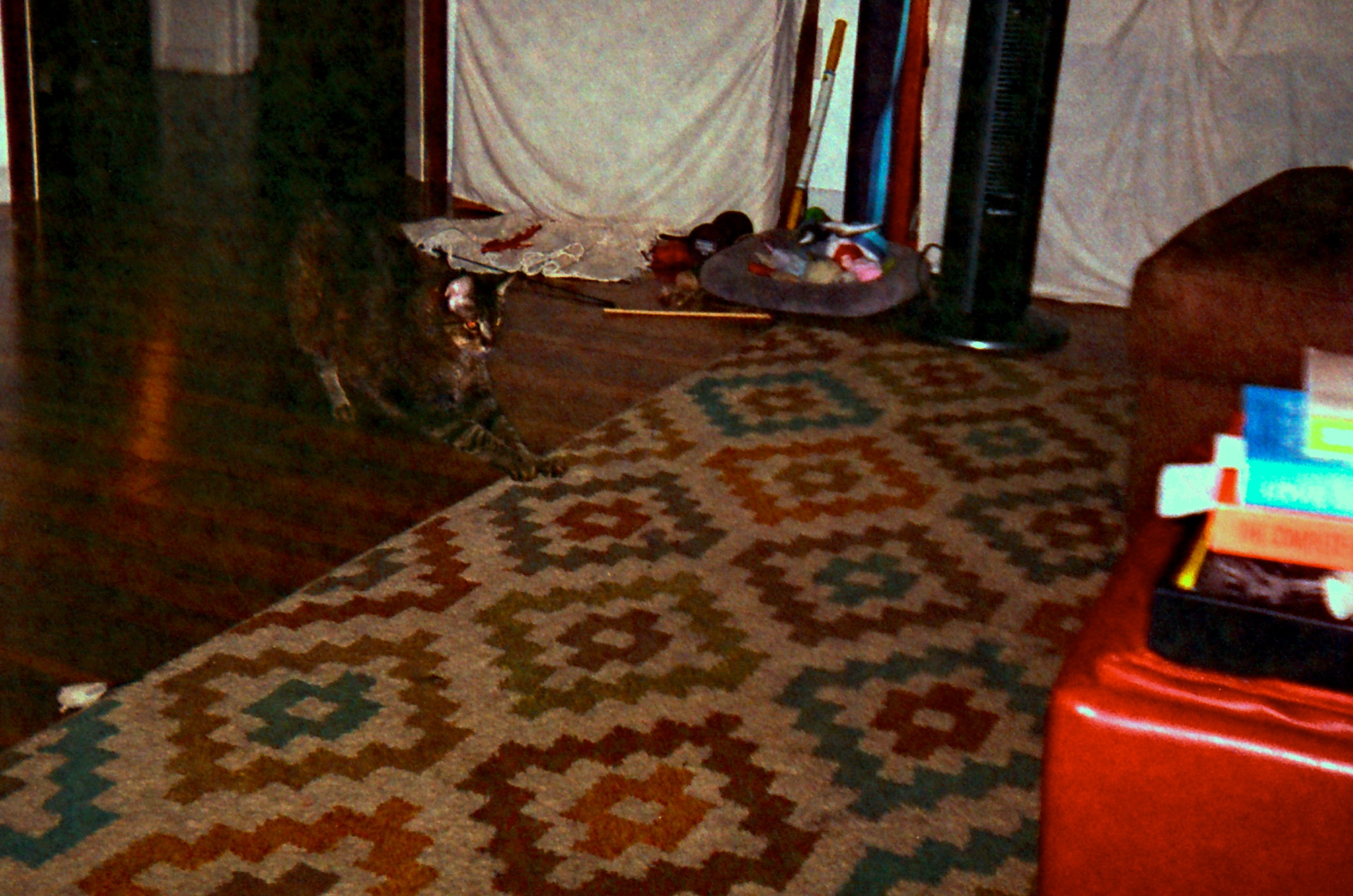 Goober showing the rug who's boss. ISO 200 & too far away pushes the flash to its limit.